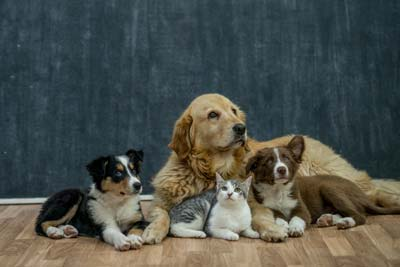 Dogs and Cats Rowena Lusby Realtor
