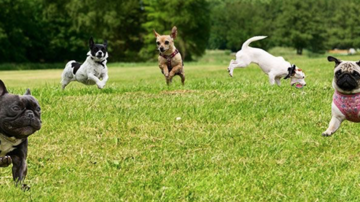 Clark County's Best Off-Leash Dog Parks