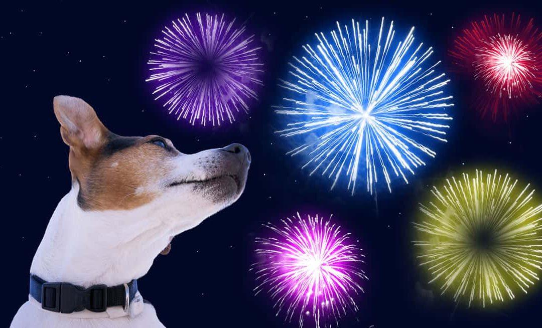 Have a Dog-Friendly Fourth of July